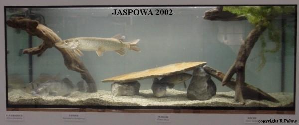 jaspo02-6ab